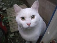 ふなばし猫(管理人)