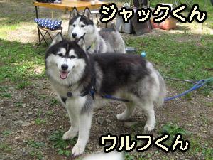 5wolfjack.jpg