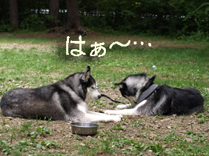 6-otikomi001.jpg