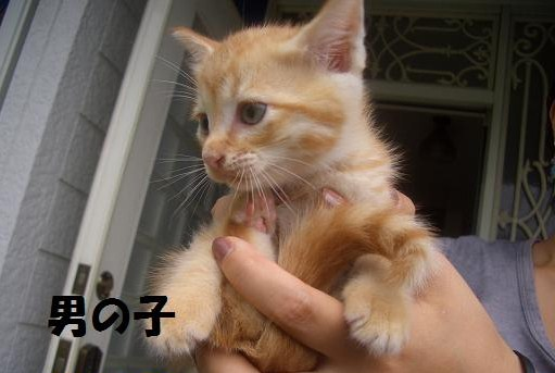 cat3_20100926180431.jpg