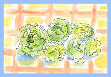 水彩画芽キャベツ