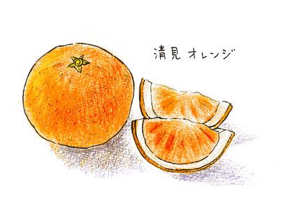 清見オレンジ01
