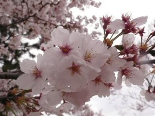 一足早い春を・・・!