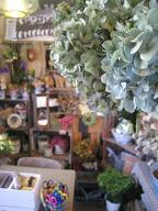 lamp.flowermarket