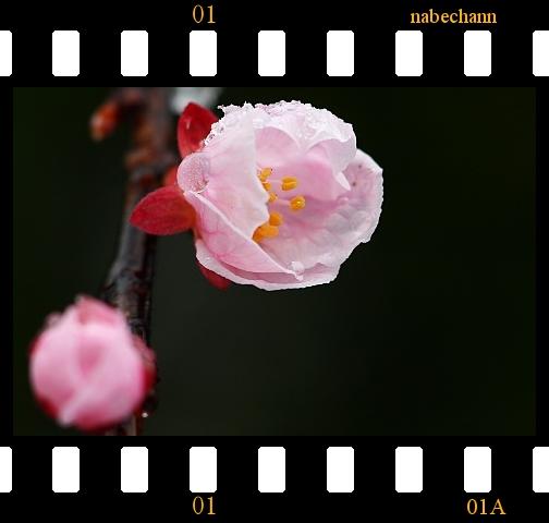 IMG_8269a.jpg