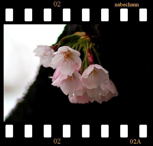 IMG_8570.jpg