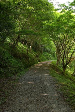 愛知県民の森2-13