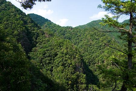 愛知県民の森3-10