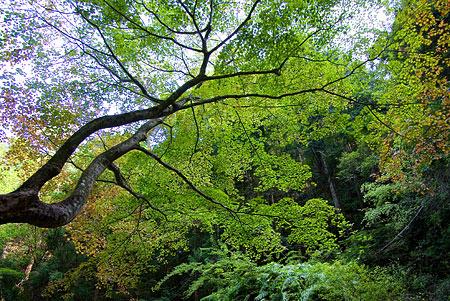 愛知県民の森3-13