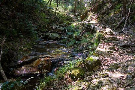 愛知県民の森3-5