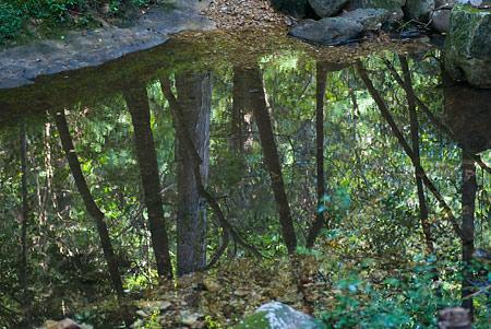 愛知県民の森4-2