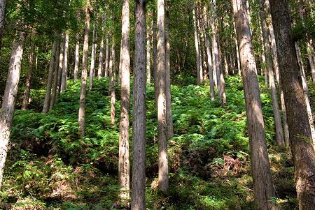 愛知県民の森4-3