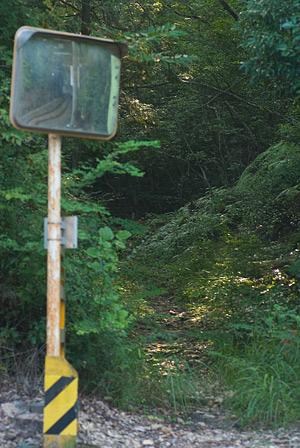愛知県民の森5-9