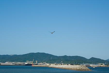 竹島とカモメ