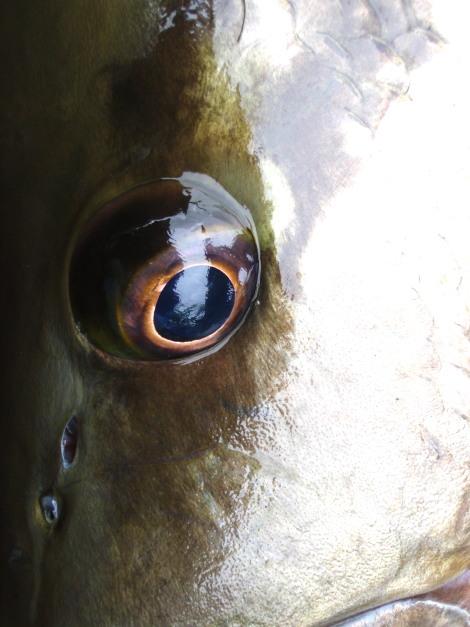 パプアニューギニア釣行 2009年8月 -その7-