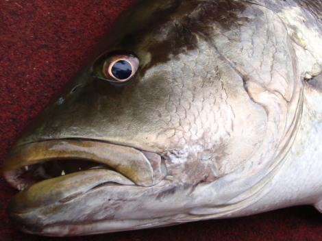 パプアニューギニア釣行 2009年8月 -その8-