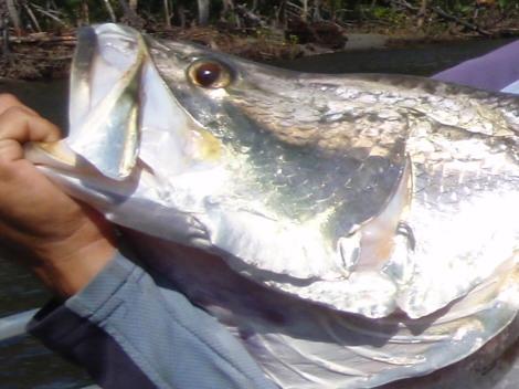 パプアニューギニア釣行 2009年8月  -その1-
