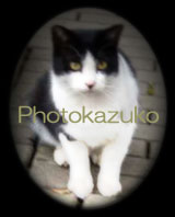 photokazuko