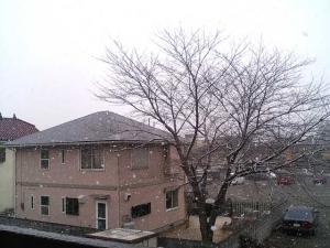 20050122.jpg