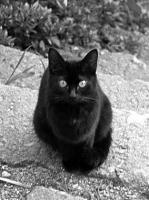 晴月と黒猫