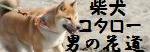 柴犬コタロー男の花道
