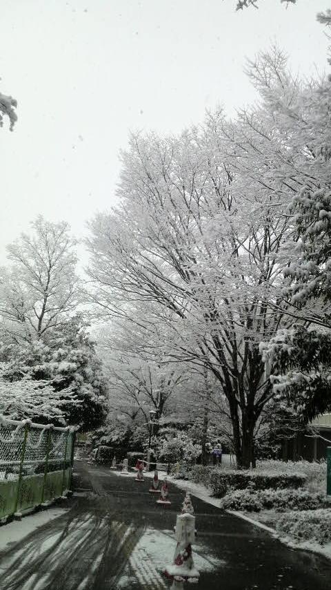 雪やこんこん2