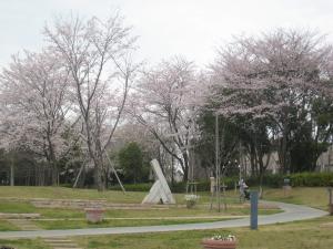 中央公園(桜開花)