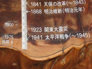 森林総研:縄文杉3