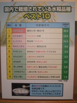 水稲ベスト10