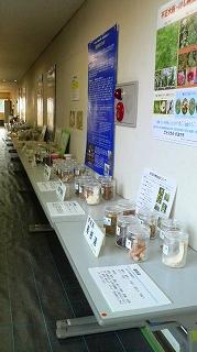 薬用植物研究1