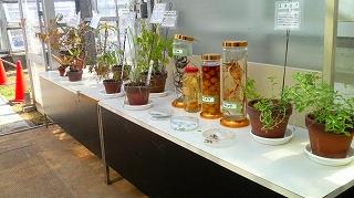 薬用植物研究2