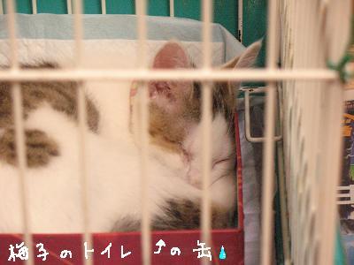 トイレで寛ぐ変なウサギ猫