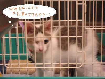 そのウチの猫の梅子…今、ウンコして臭い