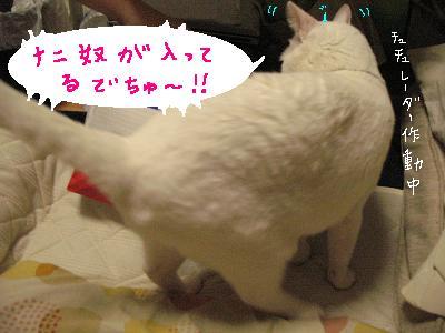 ウチの中の猫にも厳しいチュチュ